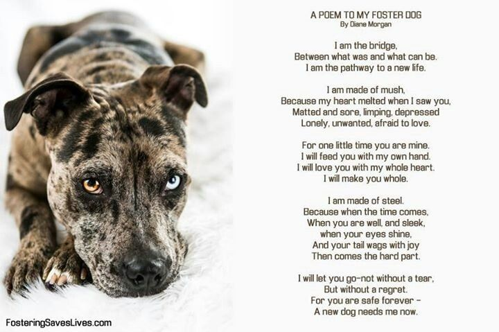 Animaladvocacy Foster Dog Foster Dog Quotes The Fosters