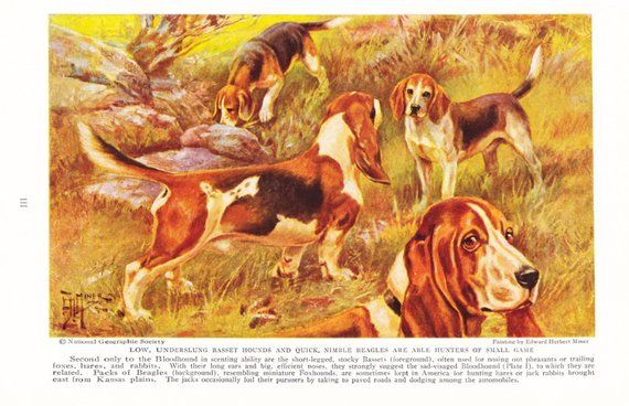 Dog 1930s Basset Hound Beagle Dog Print Vintage Antique Animal