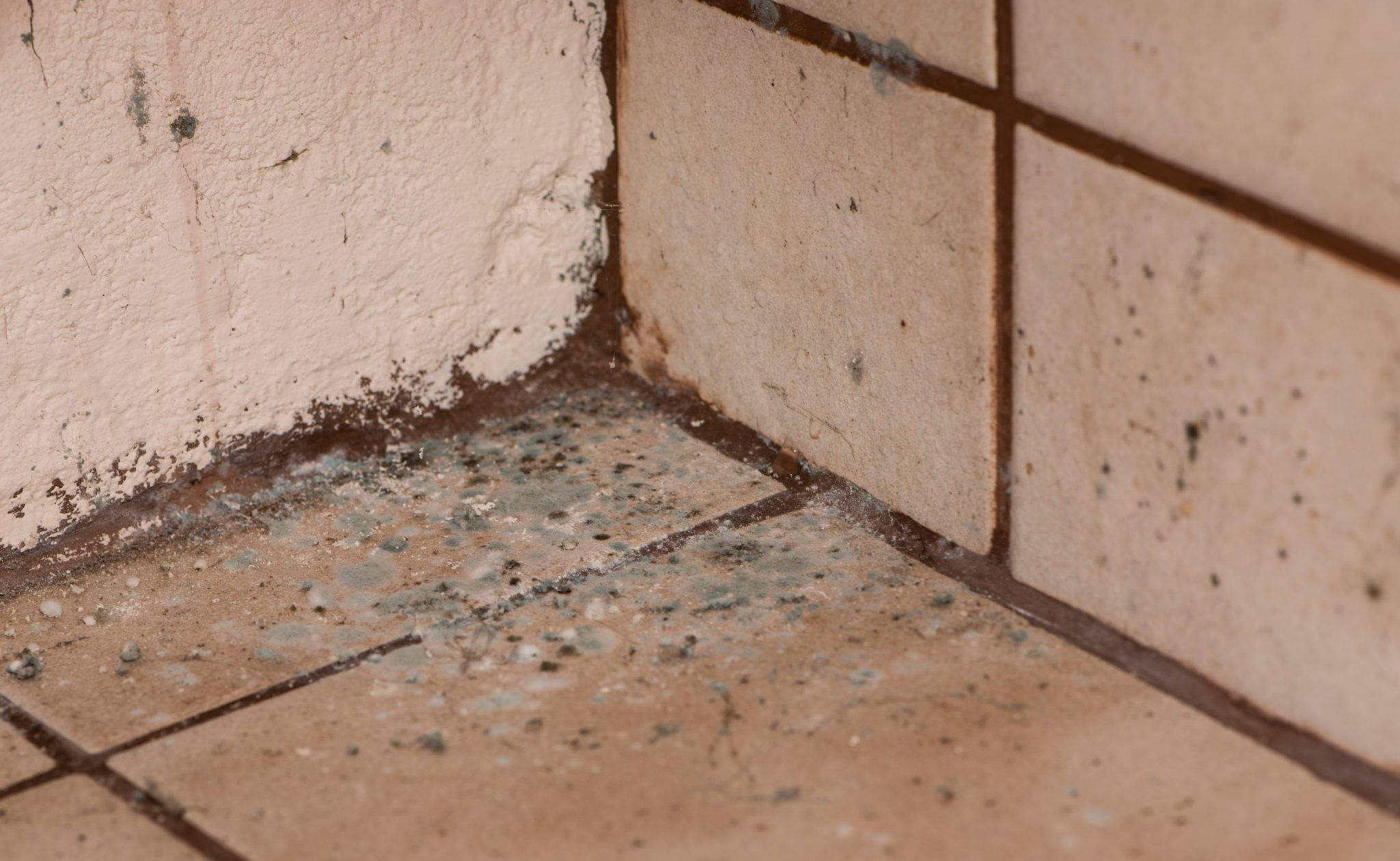 Pin On Get Rid Of Mold