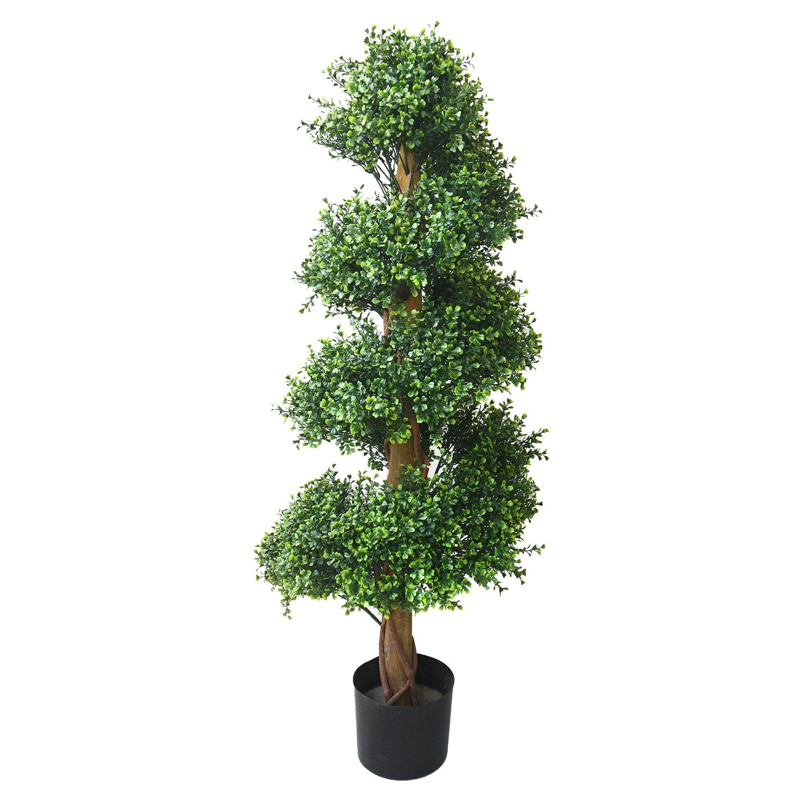 Romano Boxwood Spiral Topiary Tree