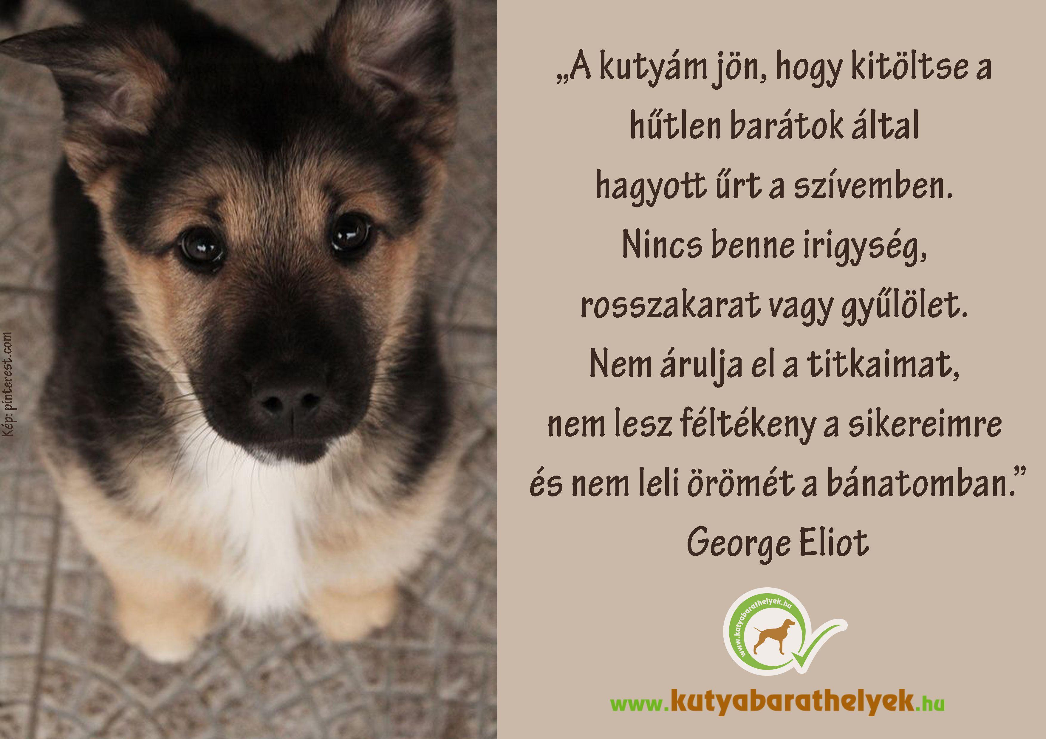 hűtlen barátok idézetek A kutyám jön, hogy kitöltse a hűtlen barátok által hagyott űrt a