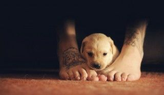 Pin By Holly Daquila On Tattoo Puppies Dogs Cute Dogs