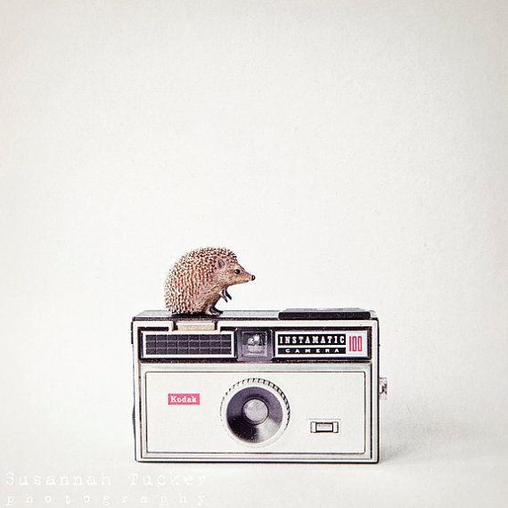 The Hedgehog and the Instamatic   8x8 quirky by SusannahTucker