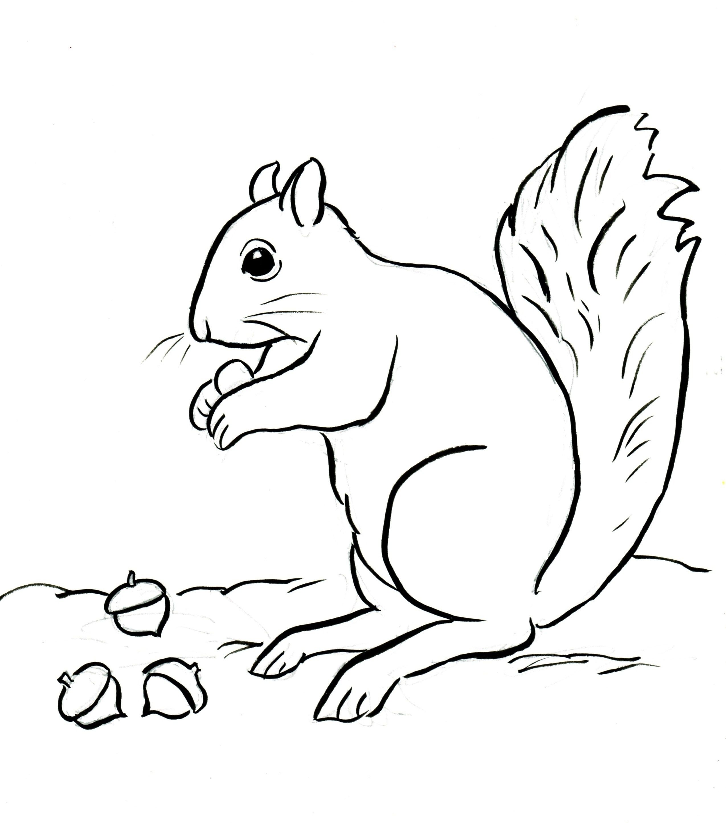 Creative Picture of Acorn Coloring Pages | lss | Squirrel ...