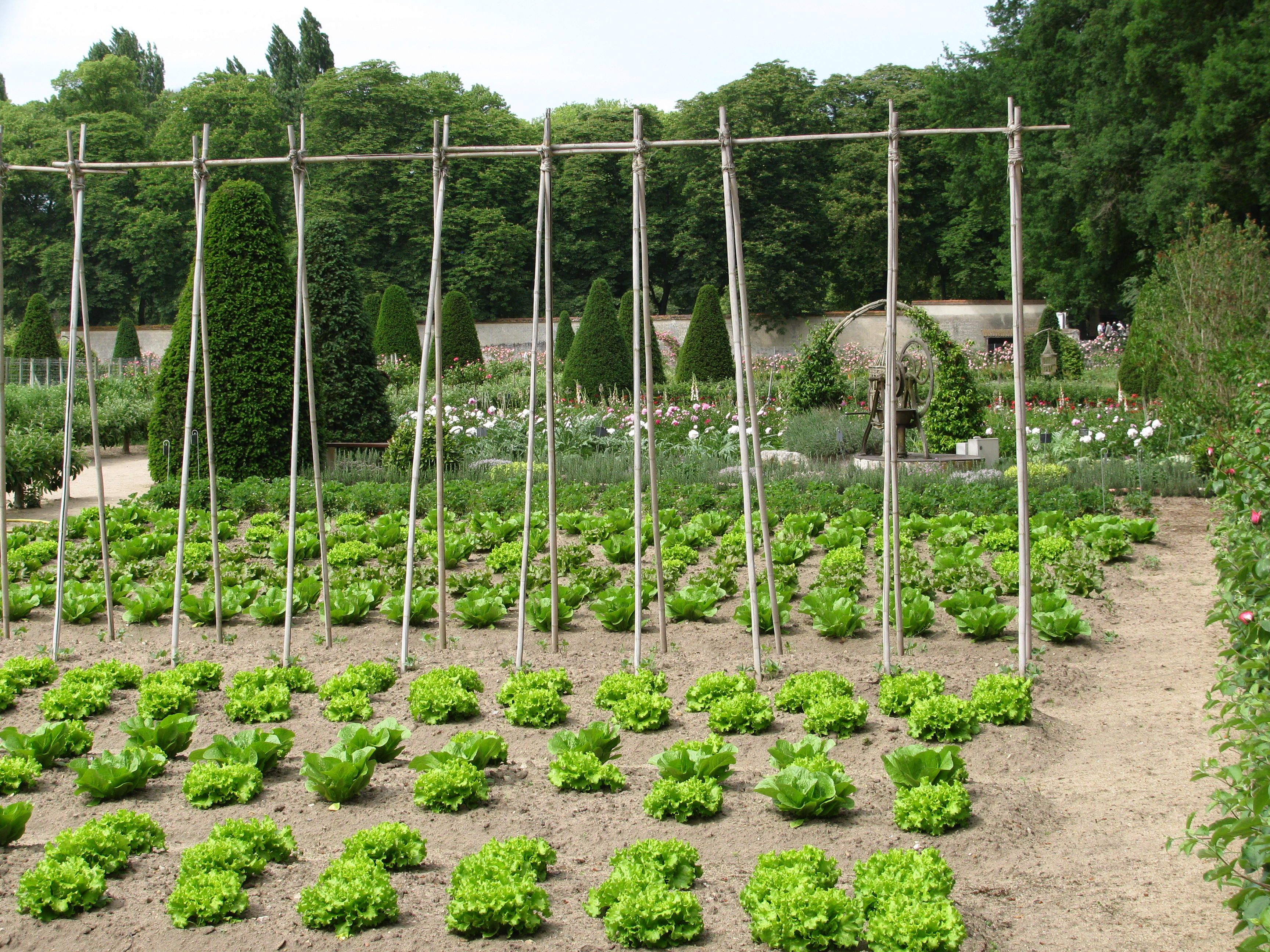 Vegetable Garden At Chateau Chenonceau