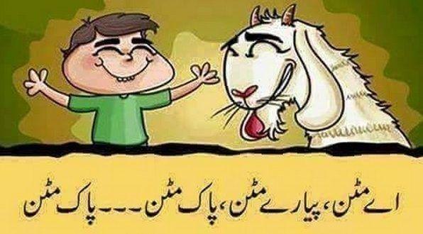 Funny Eid Ul Adha Wallpaper 2016 Free Download Funny Pics