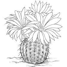 Resultado de imagen de dibujos para colorear el desierto