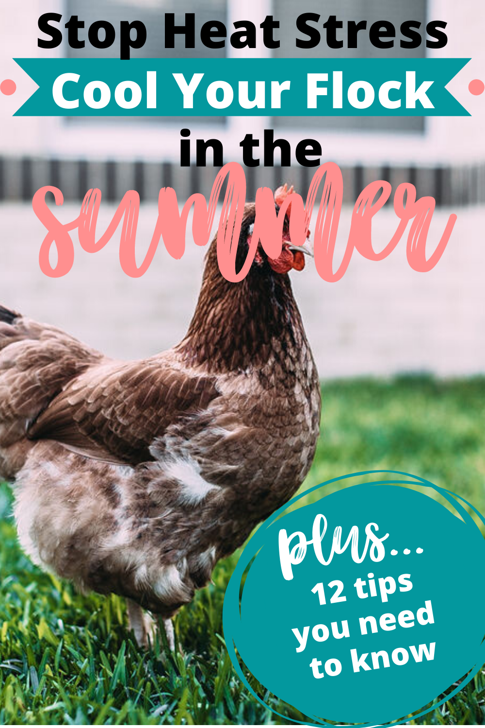 Keep Chickens Cool: 12 Tips to Use This Summer » Family ...