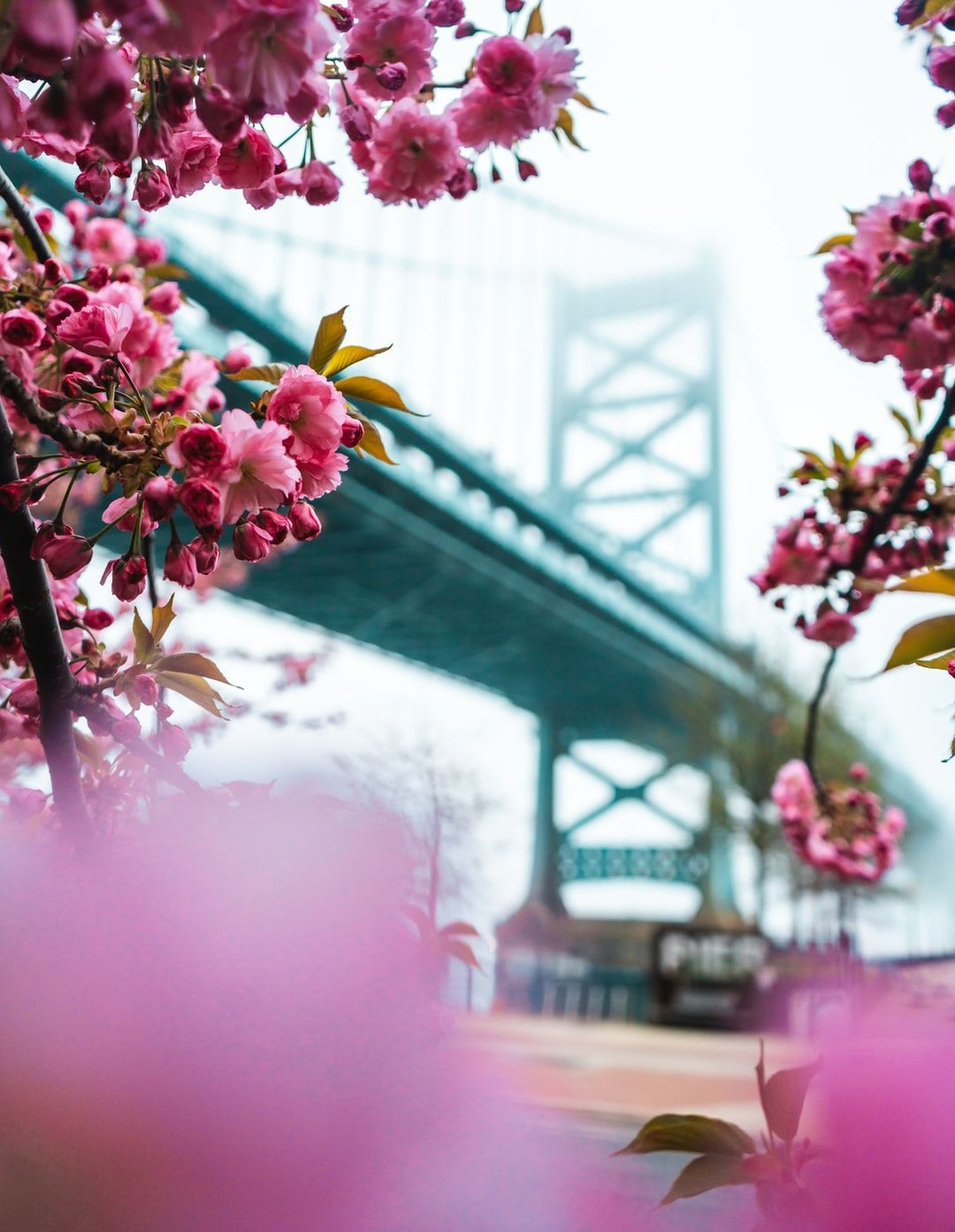 Selective Focus Photography Of Pink Petaled Flowers With A Bridge In The Background Photo Free Plant Image On Unsplash Flower Photos Flowers Flower Pictures Amazing flower bridge wallpaper