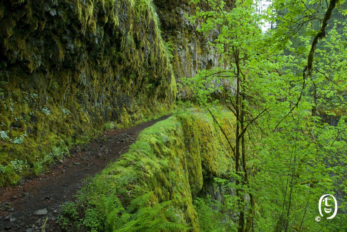Eagle Creek, Portland hiking | Hiking Trails | Portland ...