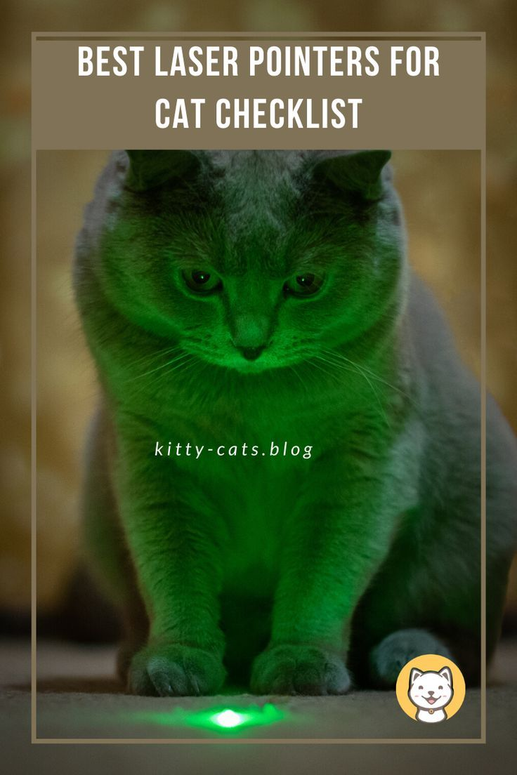 Best Laser Pointers For Cat Checklist With Buying Guide Kitty Cats Blog In 2020 Cats Cat Checklist Cat Laser