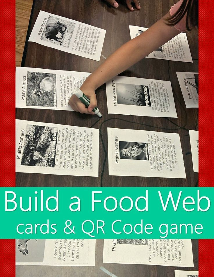 print these picture description cards and have students draw lines using dry erase marker to create a giant prairie animal food web