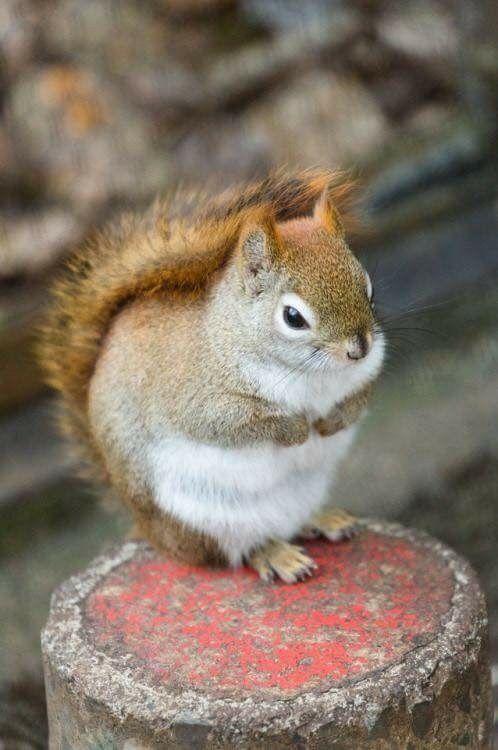 ich liebe die niedlichen eichhörnchen sie sind sooooo