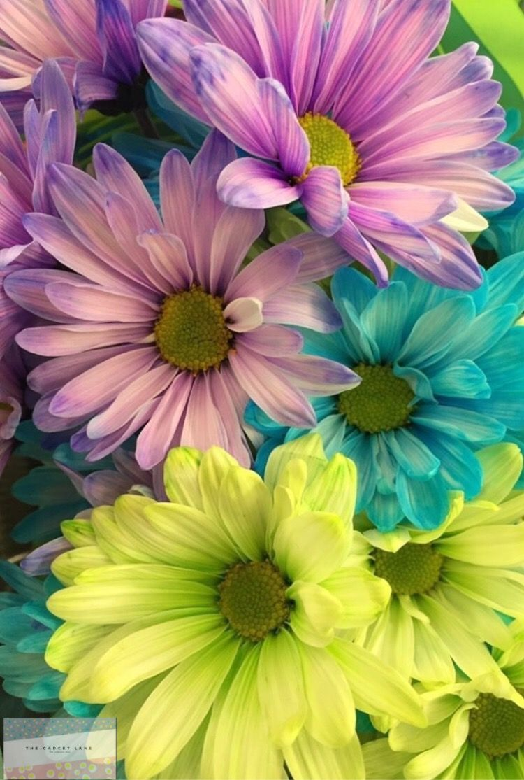 Wallpapers for iPhone and Android. Flower! Click the link below for Tech News n Gadget Updates.
