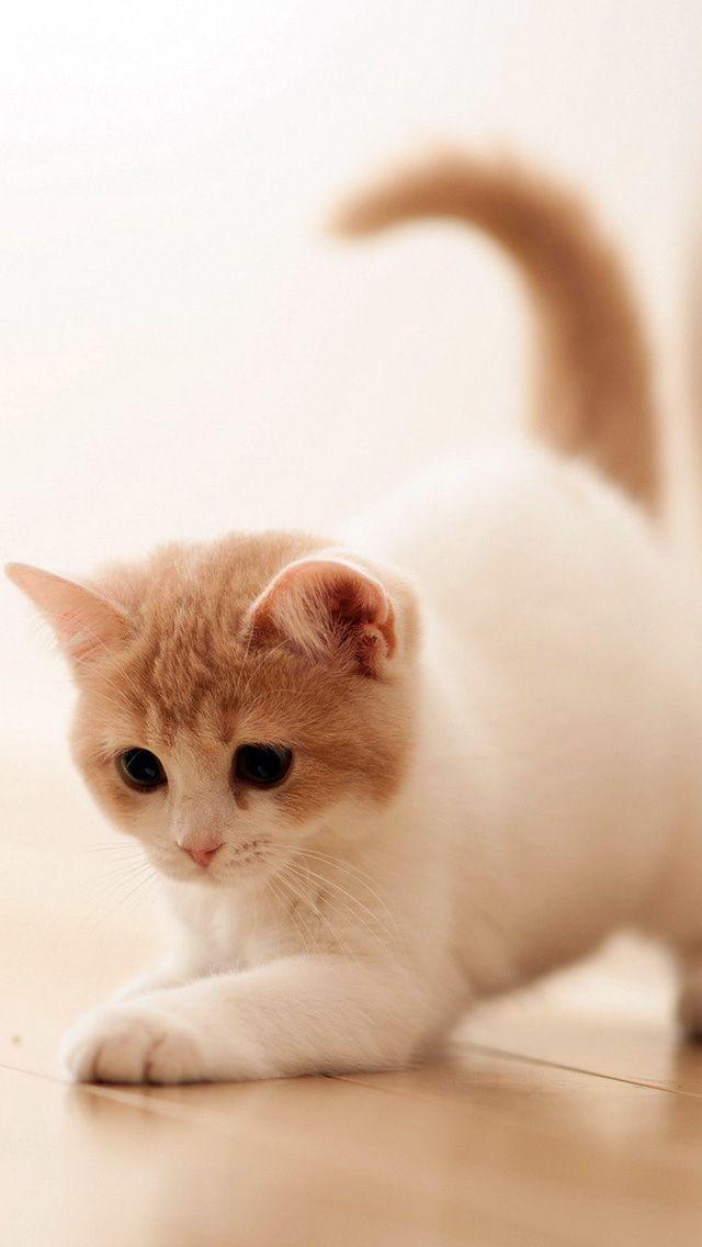 Adorable Animals Cute Baby Cats Cute Cat Wallpaper Kitten