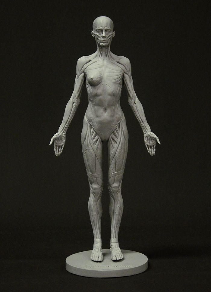 3dtotal\'s anatomical collection: female full ecorche figure ...