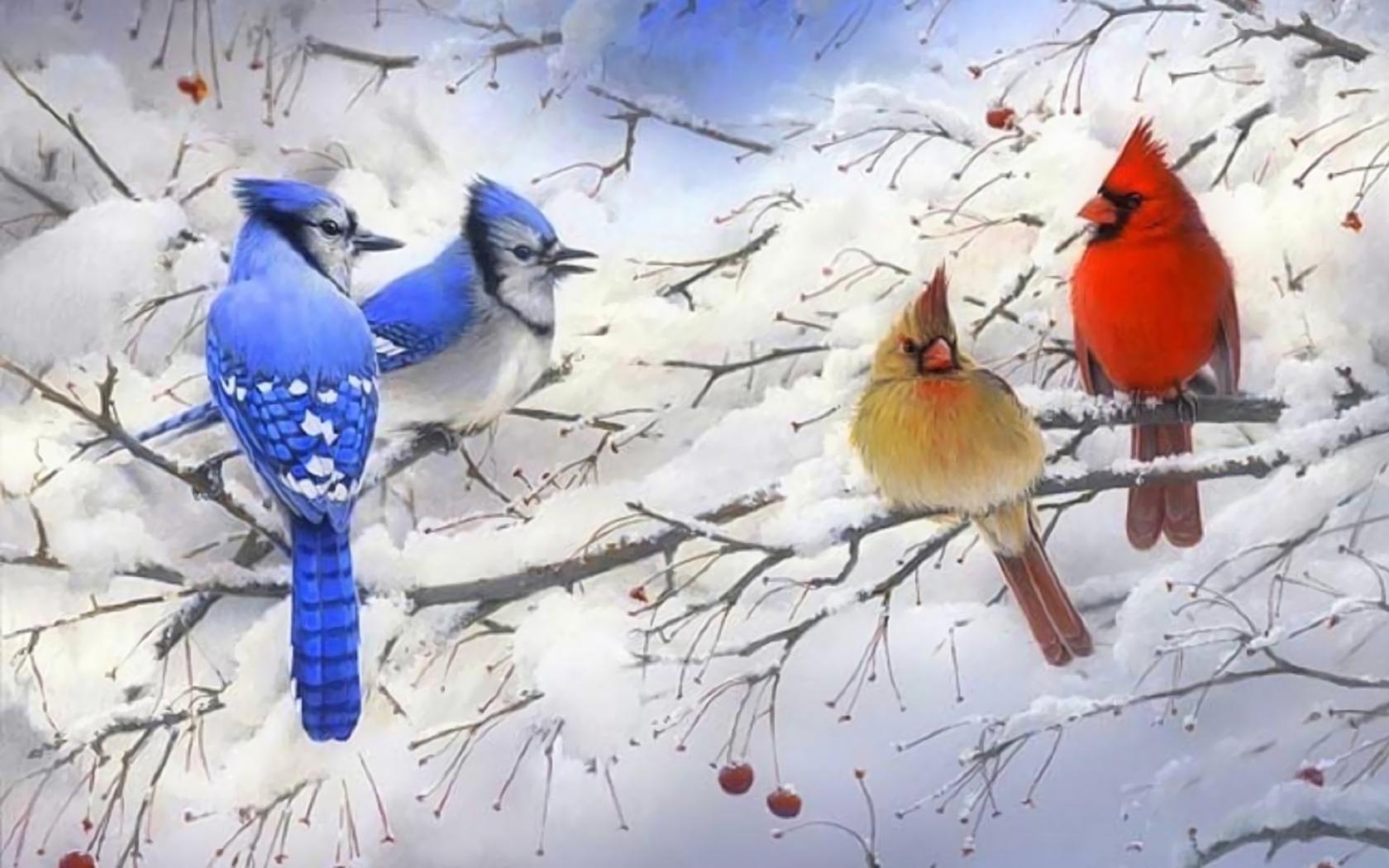 The Blue Jay Wallpaper Birds Animals (78 Wallpapers) - 3D ...