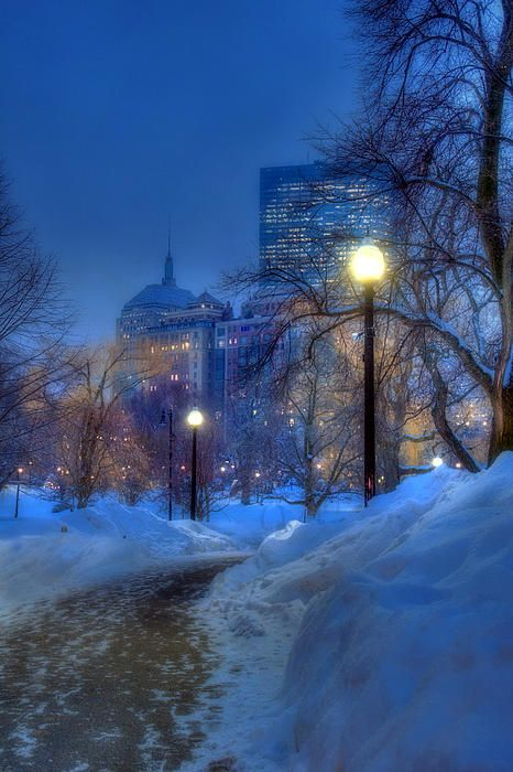 Boston Public Garden Winter Night