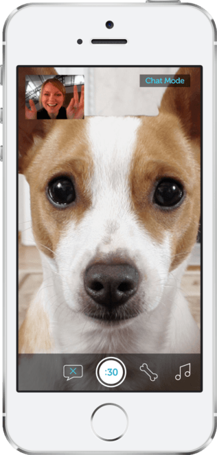 Pet Camera Monitoring System The Best Dog Camera Review 2018 Pet Camera Pet Watching Pet Daycare