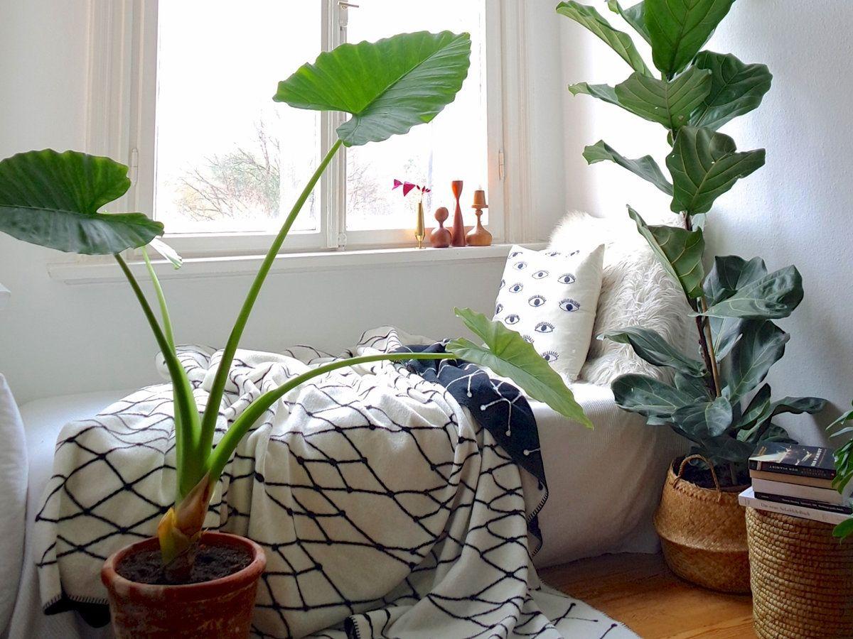 Schlafzimmer Pflanzen ~ Schön schlafen u2013 10 dekotipps für ein hübsches schlafzimmer