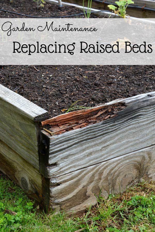 Rebuilding A Bed Garden Raised Beds Raised Garden Beds Garden