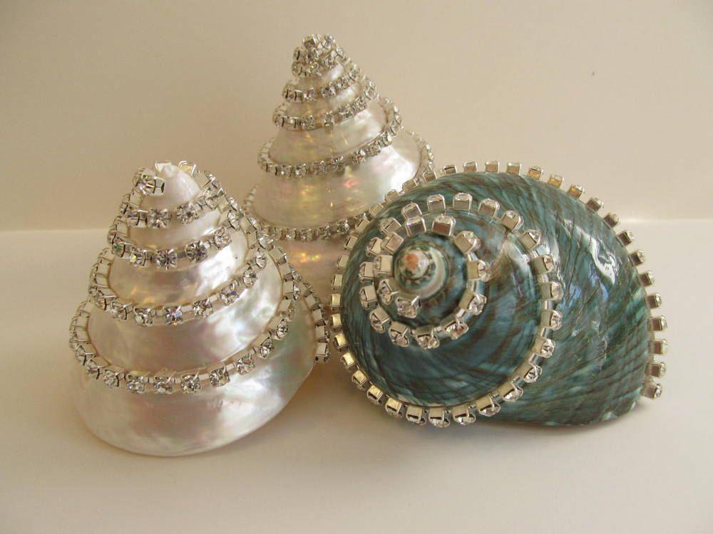 Crystal Shell Decor Iridescent Turbo Burgess Specimen Shell With