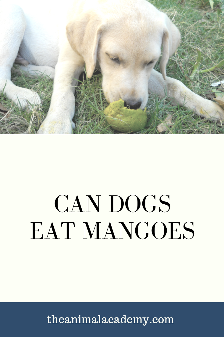 Can Dogs Eat Mango Fruit Can dogs eat, Dog eating, Dogs