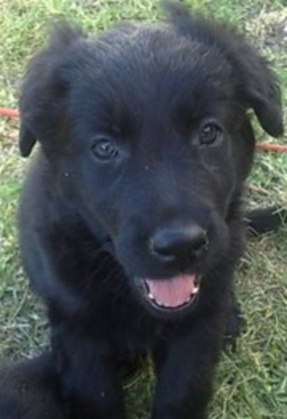 Love This Little Guy Girl S Face Border Collie X Lab D Looks