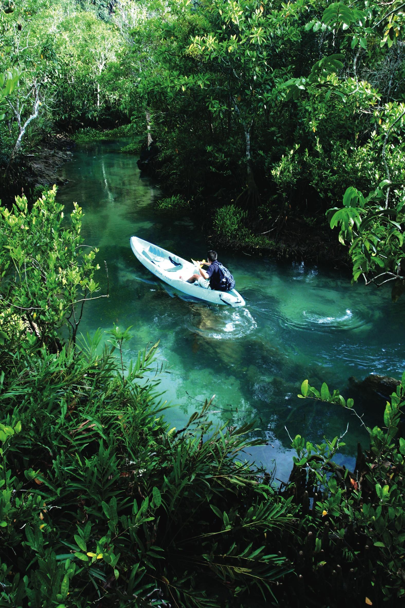 Mangrove near Krua Phranang beach, Krabi, Thailand ωнιмѕу