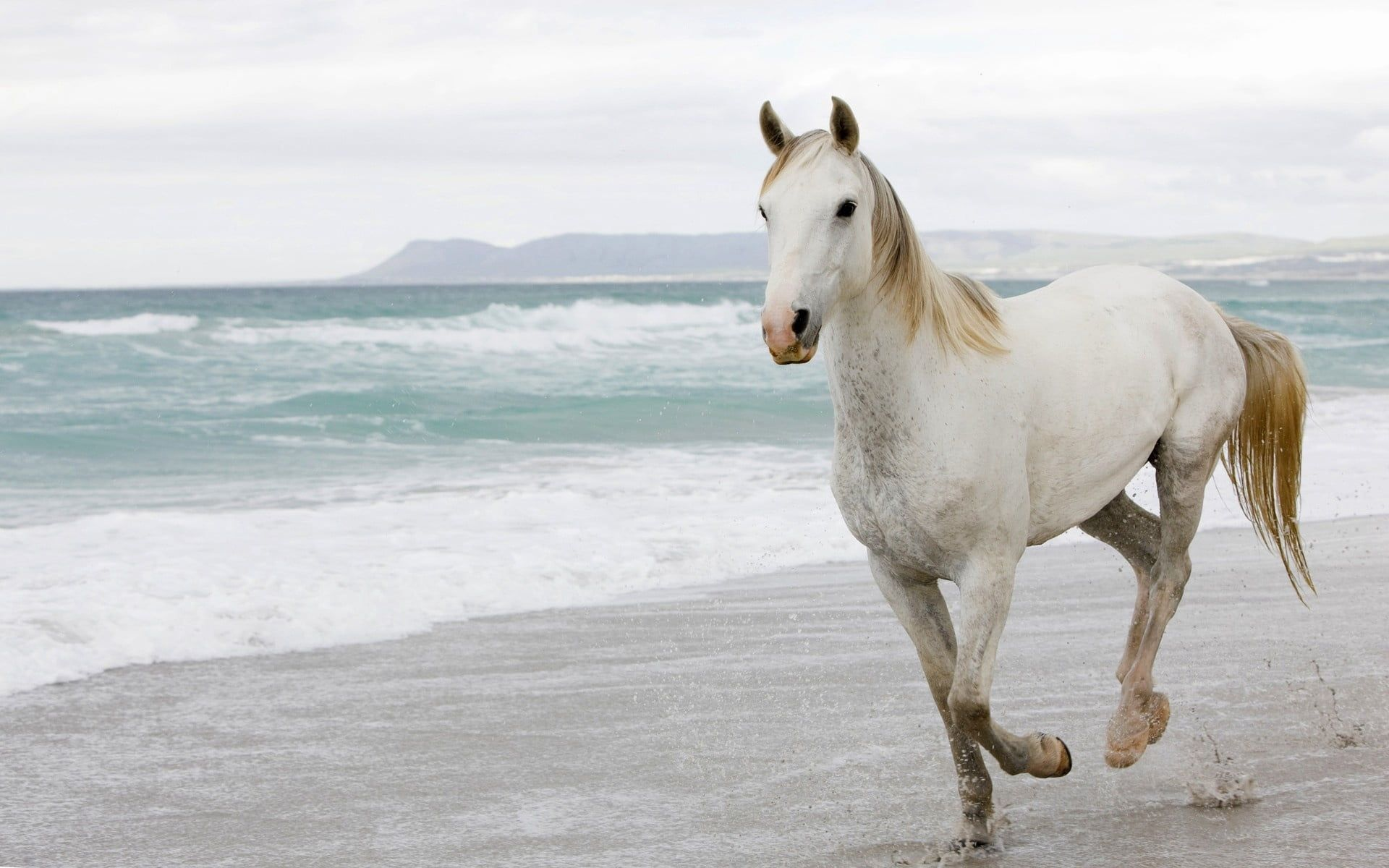 White And Brown Horse White Horse Sand Sea Escape 1080p Wallpaper Hdwallpaper Desktop Horse Wallpaper Horses Horse Photos