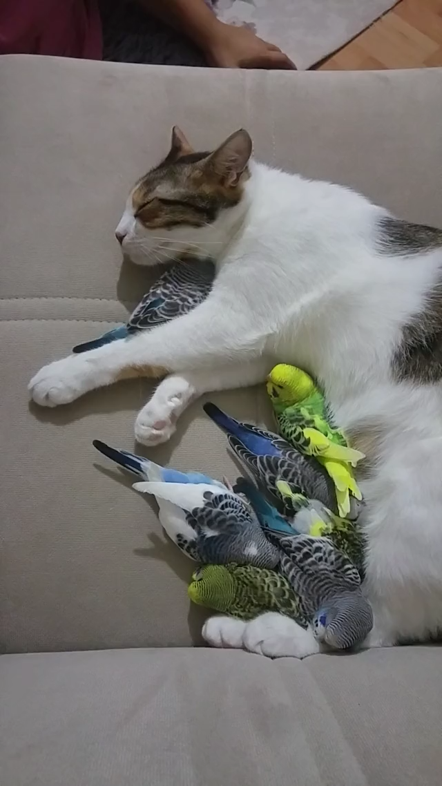 Cats and birds taking a nap. -  Cats and Birds on Our Pinterest Dog Boards. Why Not? I Imagine All of These Pins as Being Real Anyw - #Babyanimals #BaldEagle #BarnOwls #Beagles #BirdOfParadise #Birds #Bluebirds #Butterflies #Cats #Chihuahuas #ColorfulBirds #Cubs #CuteAnimals #Cutebabyanimals #CuteCats #CuteDogs #Cutepuppies #DogBeds #Eagles #ExoticBirds #Ferrets #Flamingos #Hamsters #Hawks #Hummingbirds #Kingfisher #Kittens #Kitty #LittleBirds #nap #Otters #Pandas #Parakeets #Parrots #Passerine