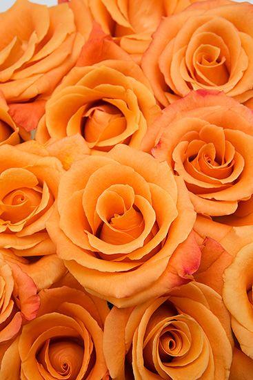 Orange Unique Roses - Calyx Flowers, Inc