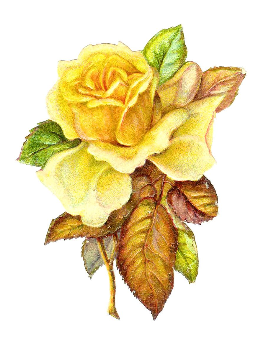 Free Victorian Roses Art Free Flower Clip Art Single Yellow Rose