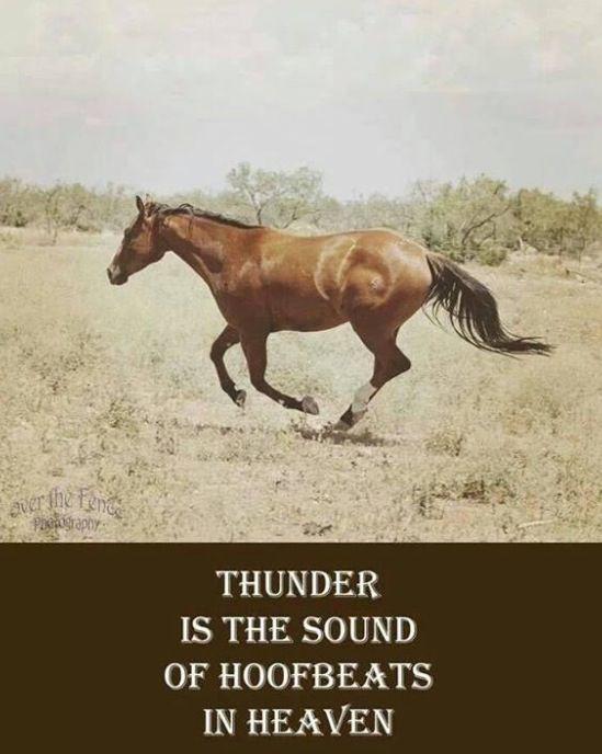 horse hooves equestrian horses pinterest pferde zum nachdenken und reiterinnen. Black Bedroom Furniture Sets. Home Design Ideas