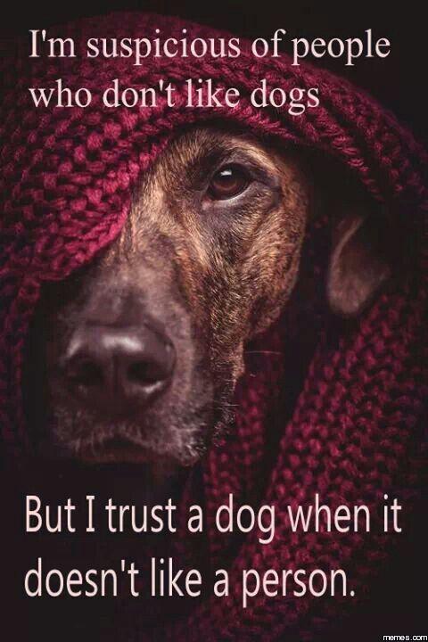 Can A Dog Sense A Heart Attack