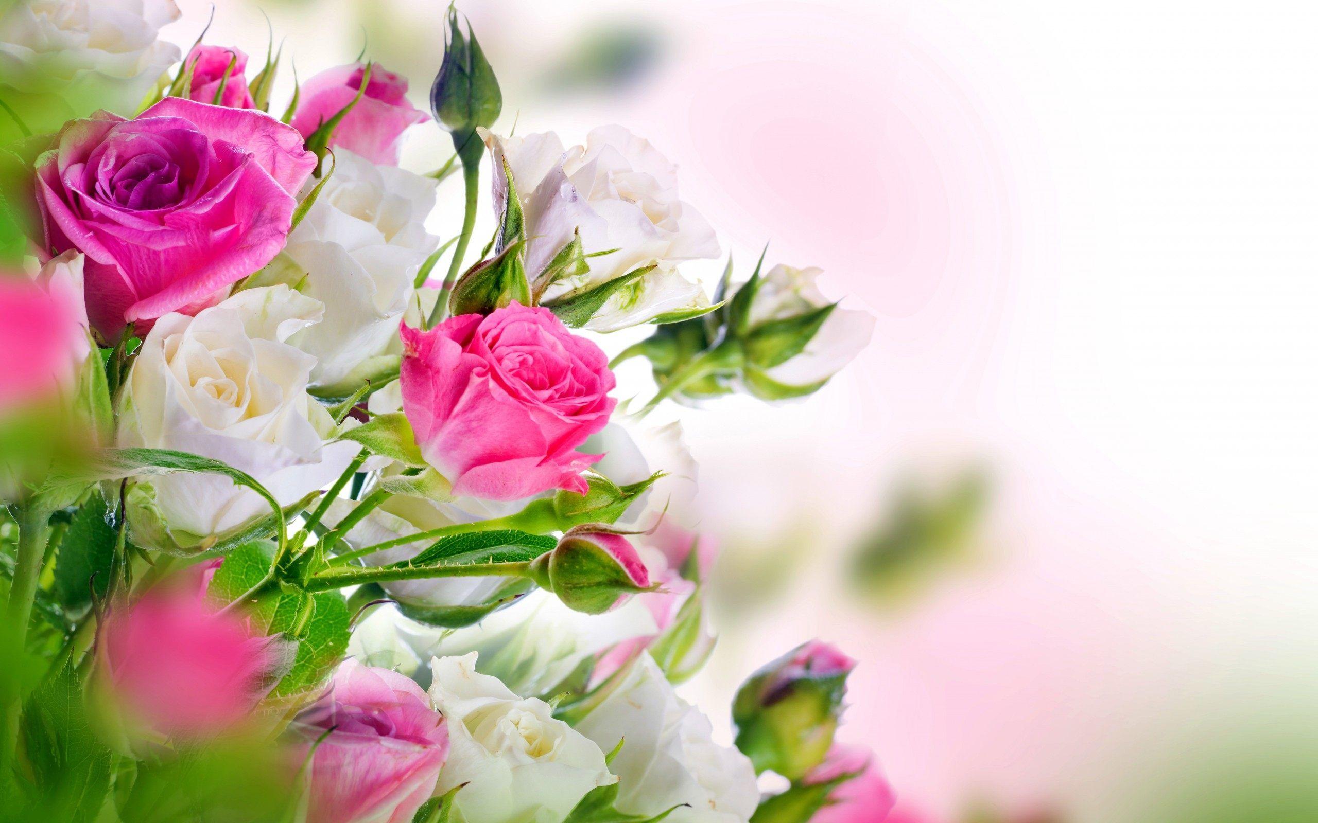 Roses Wallpapers Mobile Flowers, Rose flower wallpaper