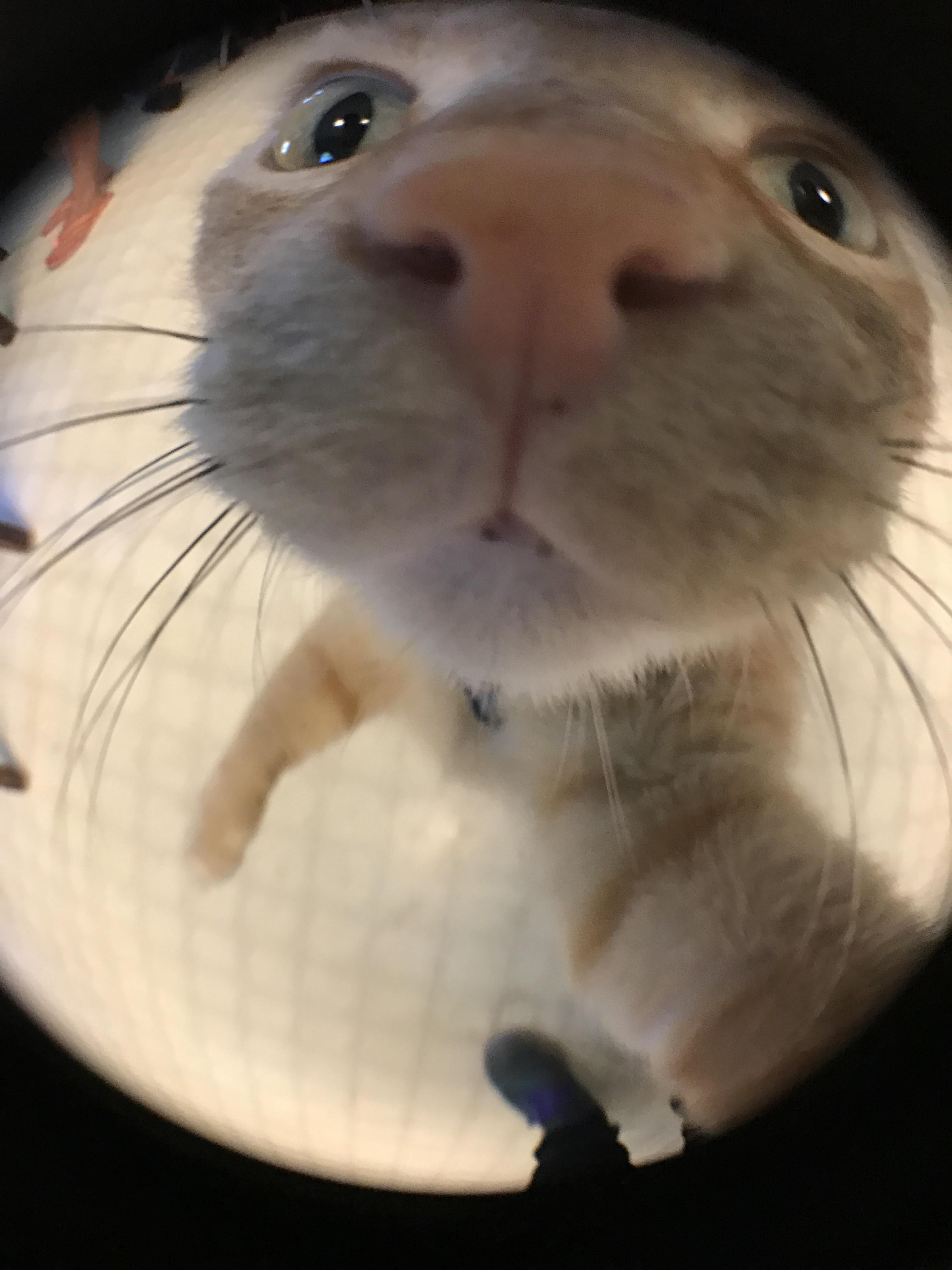 i got a fish eye lens for my phone and my cat was