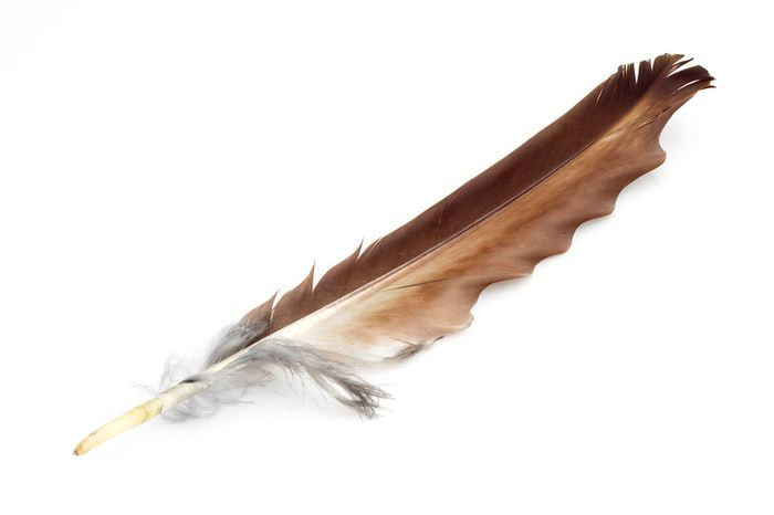 Eagle Feather Native American Stories Eagle Feathers Native