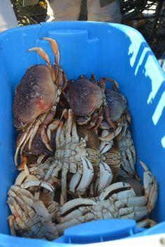 Newport Oregon Yaquina Bay Bay Clamming And Crabbing In Oregon Oregon Beaches Oregon Coast Vacation Newport Oregon
