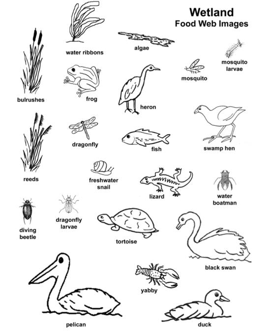 Rainforest Food Web Lesson Foodfash Co Rainforest Food Web Food Web Rainforest Animals