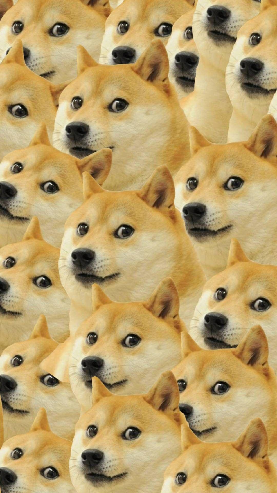 Shiba Inu Doge Wallpaper Home Screen shiba inu doge
