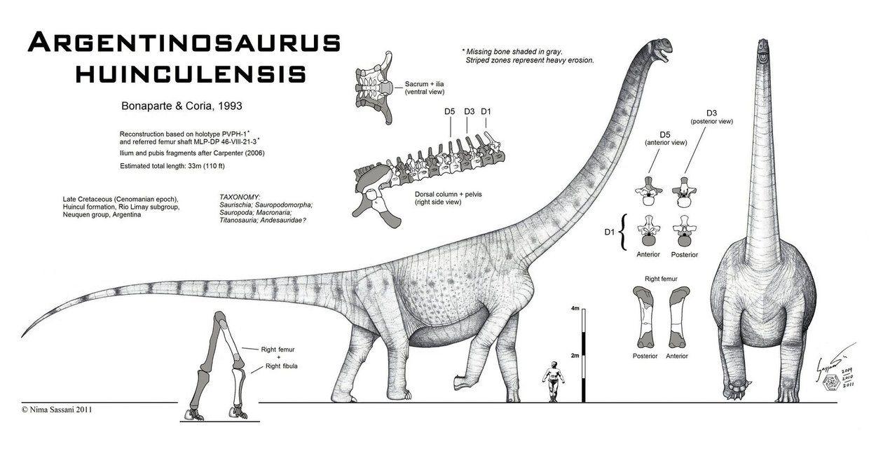 Argentinosaurus huinculensis by ~Paleo-King on deviantART