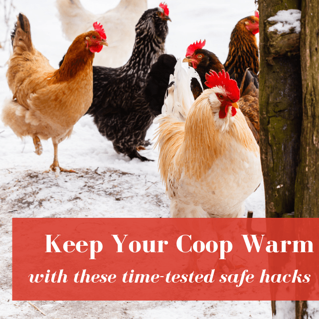 How To Keep A Chicken Coop Warm In Winter