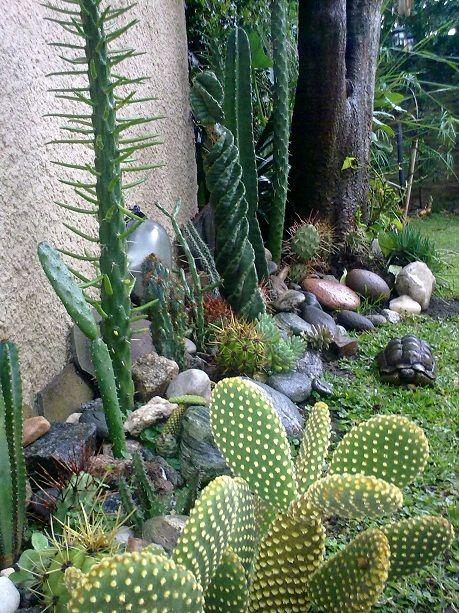Tienda decocactus cactus crasas suculentas macetas de - Ideas para jardines pequenos fotos ...
