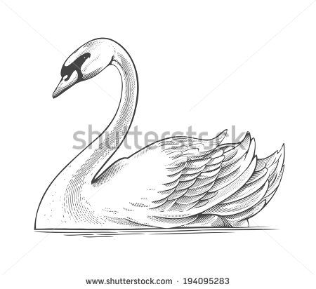description swan 2 psfpng how to draw a swan youtube swan