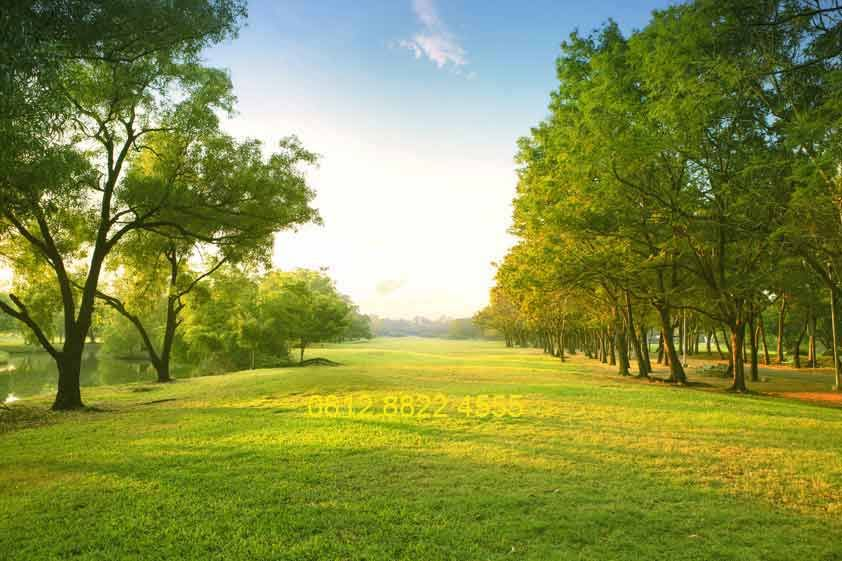 wallpaper pemandangan alam 3d - Google Search  Grass field