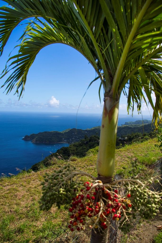 Trinidad and Tobago - The True Caribbean - Official Travel and