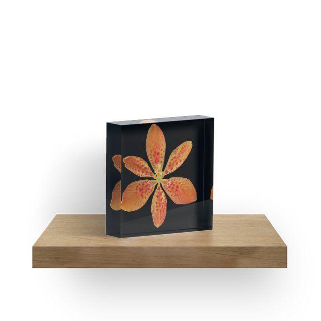 zauberhafte Blüte, Blume, Sommer, Sonne, orange, rot\u0027 Acrylblock by - wohnzimmer rot orange