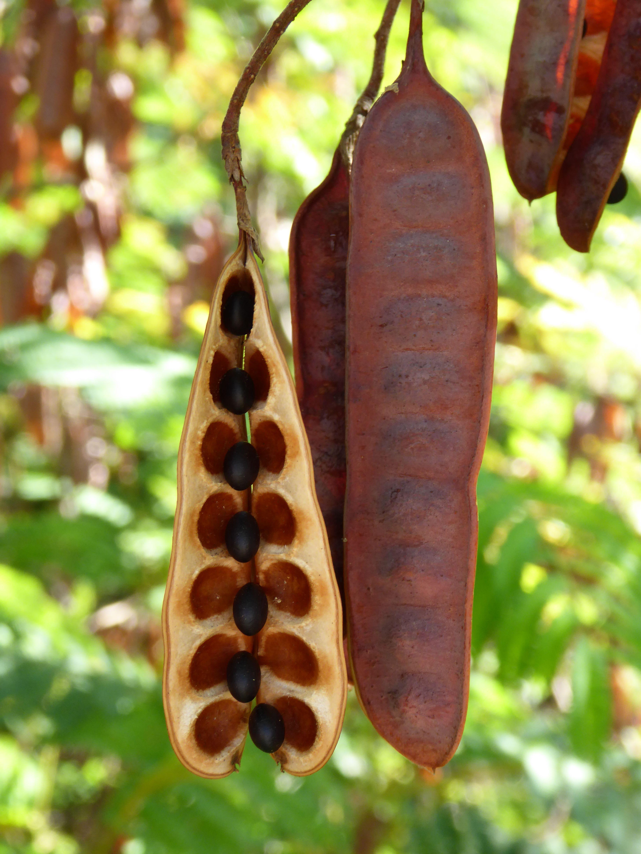 Stunning Seeds