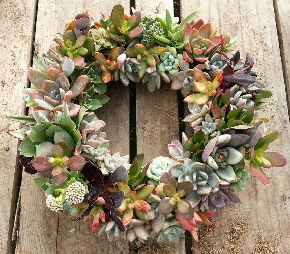 Living Succulent Wreath 10 Diameter ready to go by SANPEDROCACTUS, $70.00